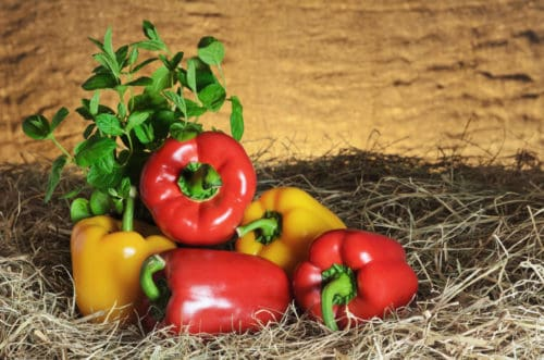 Eat Sweet Peppers for Hair Growth